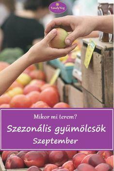 Mikor mi terem? Szezonális gyümölcsök: szeptember Holding Hands
