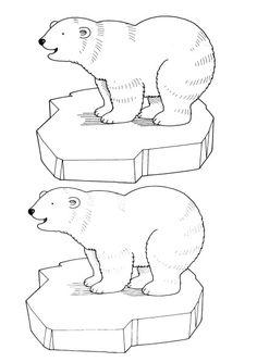 fiche ours polaire valerieassmat