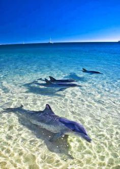 Dolphins at Monkey Mia, Australia. I wish I was in that water at that moment... www.thekimberleycollection.com.au