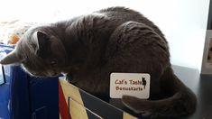 Seit diesem Jahr haben wir einen ganz besonderen Tiger, in unserem Shop. Im Gegensatz zu Campino, frisst er nämlich Treuekätzchen, statt Leckerlies. Und wenn er genug Kätzchen gefressen hat, schenkt er Euch einen 10%-Gutschein 😁 Die Bonuskarte bzw. Treuekätzchen bekommt Ihr automatisch mit jeder Bestellung zugeschickt 😻