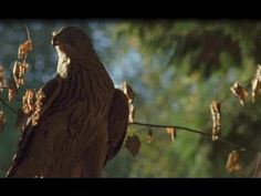 DARPA taking inspiration from birds of prey to develop agile UAVs      - http://i-hls.com/2014/12/darpa-taking-inspiration-birds-prey-develop-agile-uavs/