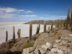 Isla Pescado ou Incahuasi - Salar de Uyuni