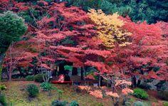 Shukkeien Garden, Hiroshima.
