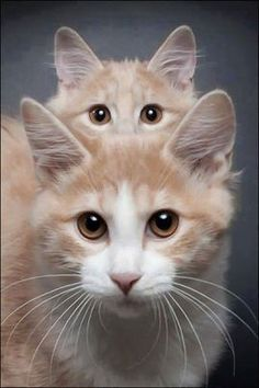 i like this image because it frames the eyes of of both of the cats