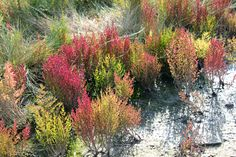 Die Farben des Quellers im September: von leichtem Grün bis hin zu kräftigem Rot.