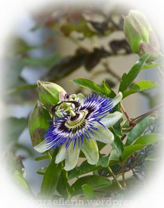 Aus meinem Garten: Mai (2) Gift From Heaven, Mai, Succulents, Roses, Bloom, Flowers, Plants, Lawn And Garden, Pink