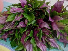 Okinawa spinach…cutting from Nehrling Gardens Okinawa, Plant Projects, Garden Projects, Permaculture Farming, Spinach Nutrition, Butterfly Garden Plants, Perennial Vegetables, Spinach Recipes, Vegetarian Recipes