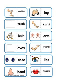 Body Parts, domino worksheet - Free ESL printable worksheets made by teachers English Games, English Activities, English Fun, English Study, English Class, English Lessons, Teaching English, Learn English, English Language