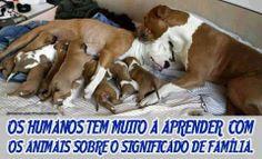 Os humanos tem muito a aprender com os animais sobre o significado de família #salve #proteja #animais