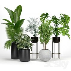модели: Комнатные - Set Crate and Barrel 04 Rooftop Garden, Indoor Garden, Indoor Plants, Metal Barrel, Crate And Barrel, Metal Plant Stand, Tall Planters, Barrel Planter, Garden Doors