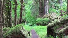 Places to go in Olympic National Park