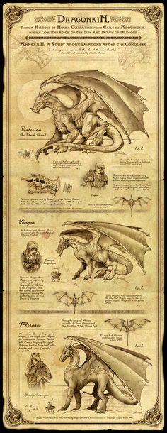 Dragonkin I by *Feliche on deviantART | a sweet encyclopedia-like description of the legendary dragons of Aegon.