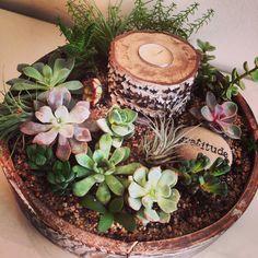 Succulents. DIY. Project gardening