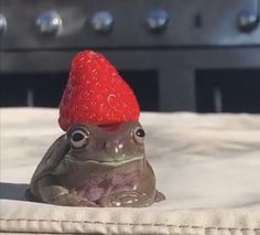 Cute Little Animals, Cute Funny Animals, Funny Animal Photos, Animal Original, Frog Pictures, Frog Pics, Cute Reptiles, Cute Frogs, Frog And Toad