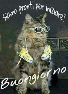 Buongiorno Good Morning, Kitty, Animals, Cristiani, 3, Link, Teal, Image, Good Morning Wishes