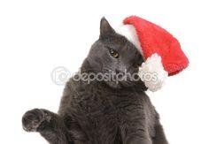 Gato de Natal - Papai Noel, Natal pet do chapéu de Papai Noel de gato cinza — Imagem de Stock #54836869