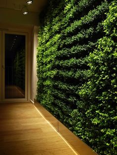 Green Wall Gardening System Ask Green Design How They Can Help You With  Your Own Office