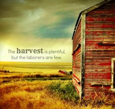 """""""Then He said to his disciples, """"The harvest is plentiful but the workers are few."""" Matthew 9:37"""