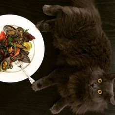 My mesclun salad dinner with a side of Mischka.  to be fair, I steamed one mussel to go with his tuna treat, clearly one was not enough. A fat paw poised on my fork. #Mischka #RussianBlue #greycat #fatty #furrypaws #dinnerfortwo