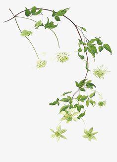 So Simply Lovely. Botanical Flowers, Botanical Art, Botanical Illustration, Watercolor And Ink, Watercolor Flowers, Watercolor Paintings, Chinese Painting, Chinese Art, Jugendstil Design