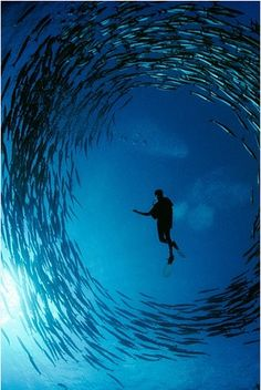 PADI  The Way the World Learns to DIVE