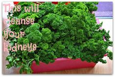 Simple kidney cleanse with parsley. Cleanse your kidneys with parsley to prevent stones from forming.  This parsley cleanse can also rid kidney stones.