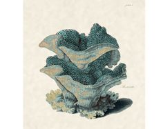 Beach Decor Antique Sea Fan Coral Print for Coastal Wall Decor Plate4 on Etsy, $10.00