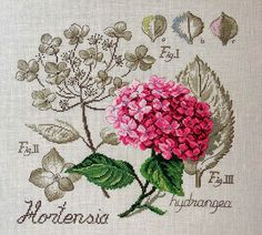 Hydrangea.