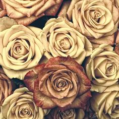 Imagem gratis no Pixabay - Rosas, Flores, Red, Planta Black And White Roses, Yellow And Brown, Romantic Roses, Beautiful Roses, Beautiful Things, Rose Violette, Photocollage, Purple Roses, Vintage Floral