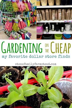 Gardening on the Cheap: My Favorite Dollar Store Finds – Stone Family Farmstead - diy und selbermachen ideen Dollar Store Hacks, Dollar Store Crafts, Dollar Stores, Diy Garden Decor, Garden Crafts, Garden Projects, Diy Decoration, Decor Crafts, Diy Projects