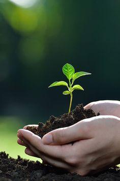 Descubre cómo decorar tu jardín de forma original. Photography Projects, Nature Photography, Life Is Beautiful, Beautiful Flowers, Nature Verte, Tree Day, Nurse Art, Beauty Planet, Flower Phone Wallpaper
