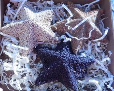 I used these Star shaped bird feeder ornaments and my old Christmas wreath to feed the birds in my garden. See the project: http://thegardeningcook.com/boxwood-wreath-bird-feeder-diy-project/