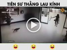 The girl was surprised when the dogs hit the glass doors inside the mall Adele Video, Luxury Pet Beds, Relaxing Gif, Big Screen Tv, Cat Watch, White Cats, Cute Animal Pictures, Glass Doors, Cat Gif