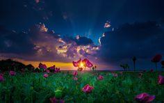Terra/Natureza Flot  Nature Landscape Field Pink Flower Cloud Sunbeam Papel de Parede