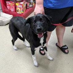Available pets at Fort Worth Animal Care & Control Center in Fort Worth, Texas Fort Worth Texas, Animal Rescue Site, Animal Care, Border Collie, Pet Care, Pet Adoption, Meet, Dogs, Animals