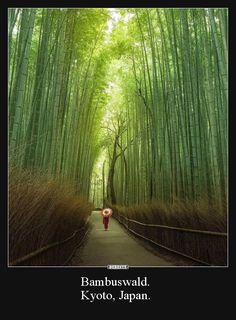 Pathway through the bamboo forest in Arashiyama, Kyoto, Japan. Photo: (i. Kyoto Japan, Japan Japan, Bamboo Forest Japan, Places To Travel, Places To Go, Forest Bathing, Destination Voyage, Japan Photo, Nature Images