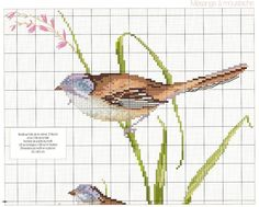 Gallery.ru / Фото #116 - Le grand livre des oiseaux - irinask