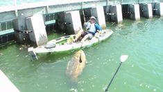 Cape Coral Man lands Largest Kayak Bottom Fish Ever! Crazy stuff right here!! Must watch till the end.   www.HammerheadTrucks.com 561-444-3190