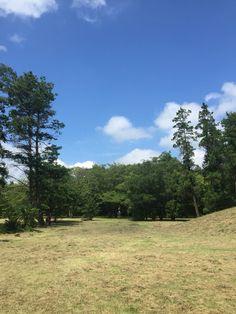 草刈り後の国営昭和記念公園ディスクゴルフコース#12