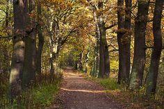 Wildgehege Spandauer Forst,  Alteichenbestand, Foto: Florian Möllers