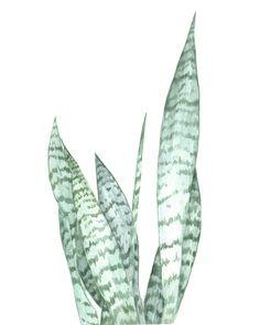 Watercolor botanical print Art Print
