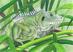 iguana_iguana_by_sabrinamelisa-d676awm.jpg (1024×741)