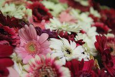 Wij bieden ook speciale deluxe bloemarrangementen aan vanaf €250. Met dit bedrag kleden we de volledige zalen van de ontvangst, de diner tafel en het feest aan met vers bloemwerk. Vraag naar de mogelijkheden bij onze vestigingen. Plants, Seeds, Plant, Planting, Planets