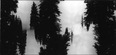 A mysterious forest abyss #Pinhole #Photography