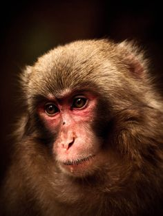 """""""Hamish Campbell is a photographer with an exacting eye for detail and rigorous exploration of ideas. A serious technician, his prints are both didactic and highly nuanced…"""" Eye For Detail, Monkeys, Portraits, Artists, Explore, Photography, Animals, Rompers, Photograph"""