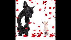 Pets and the Online Dating Scene Super Cute Dogs, Pet Lovers, German Shepherd Dogs, Online Dating, Labrador Retriever, Moose Art, Things To Think About, Scene, Pets