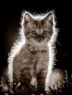 Kitten by Chad Briesemeister on 500px