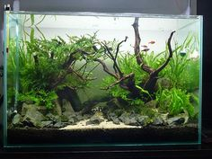 Aquascape fish tank stone and plant ideas