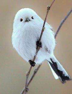 Ополовник by dmitrijsu Cute Birds, Pretty Birds, Small Birds, Colorful Birds, Little Birds, Beautiful Birds, Animals Beautiful, Animals And Pets, Baby Animals