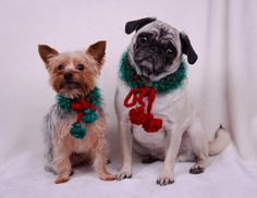 OMG. How can you resist that face. Oh, yeah, and they are wearing cute holiday scarves.